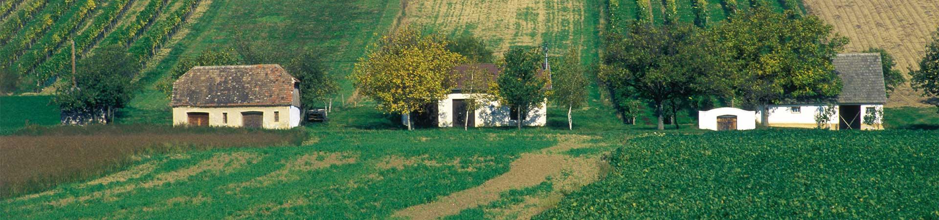 Wein - Weinkultur im Schmidatal