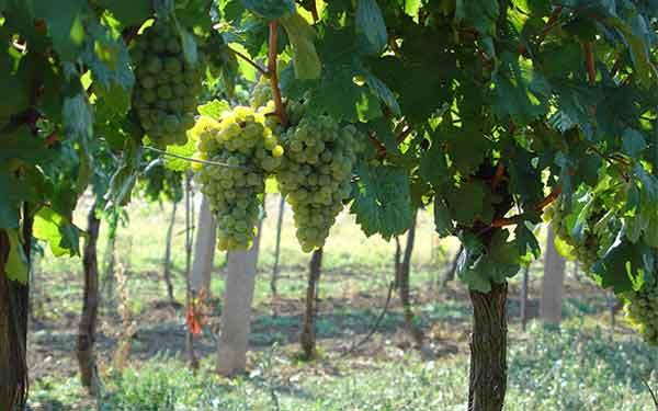 Weingut Hagenbüchl - Wein aus dem Schmidatal