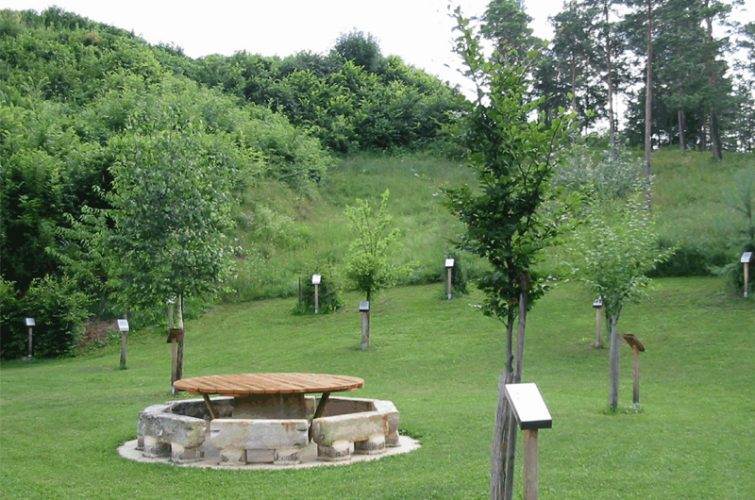 Lebensbaumkreis im Schmidatal