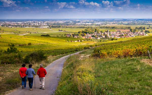 Großgemeinde Rundwanderweg Ziersdorf