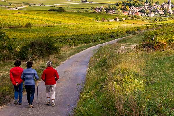Groß-Gemeinde-Rundwanderweg Ziersdorf