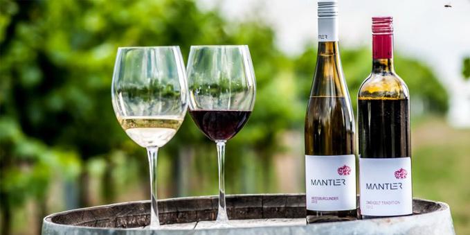 Weingut Mantler im Schmidatal