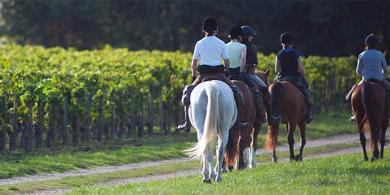 Ausritt in den Schmidataler Weingärten