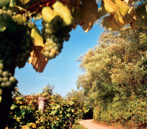 Rundwanderweg und Laufstrecke in Ravelsbach