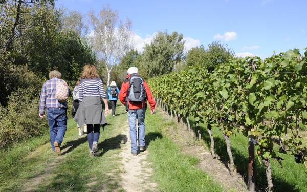 Weinwanderweg Wetzdorf - Wandern und aktiv im Schmidatal