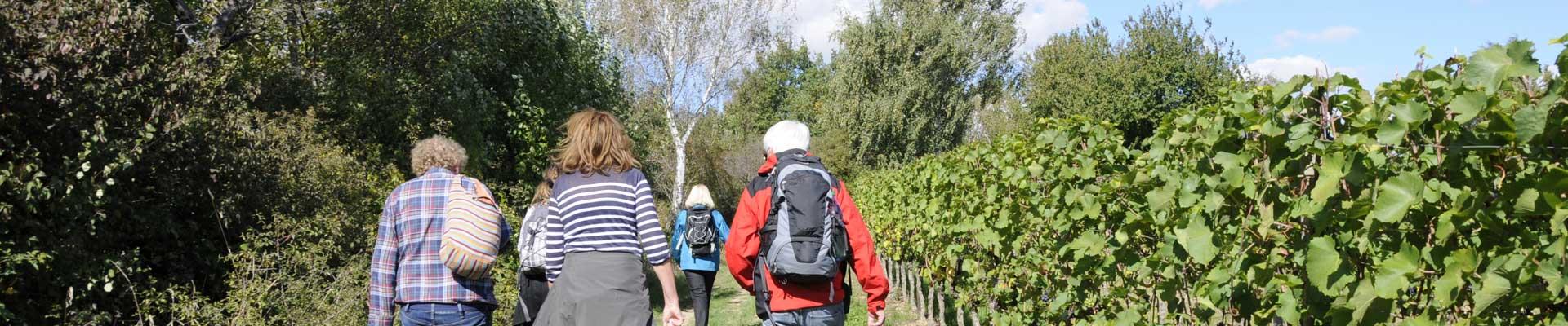 Weinwanderweg Wetzdorf - Wandern im Schmidatal