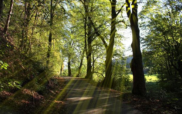 franz-bhackerweg-beitragsbild
