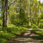 manhartsberg-rundweg-wandern-schmidatal-niederösterreich-aktivität-natur-wald
