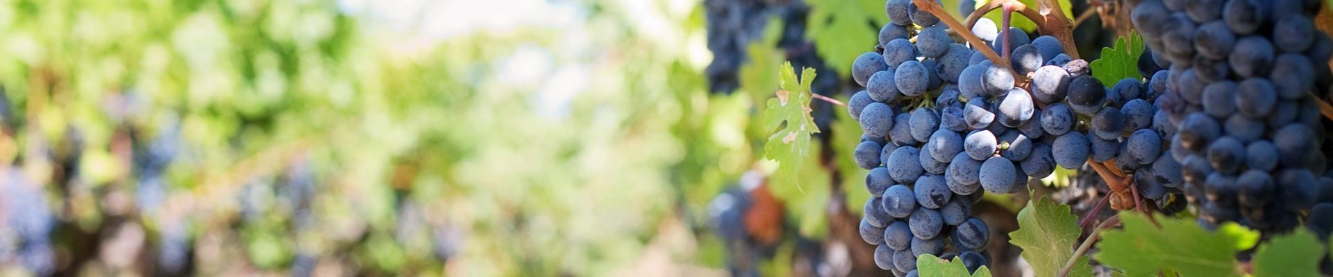 Weinkultur - Wein und Weinbau im Schmidatal