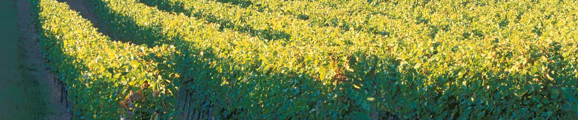 Wein, Weinkultur und Landschaft im Schmidatal