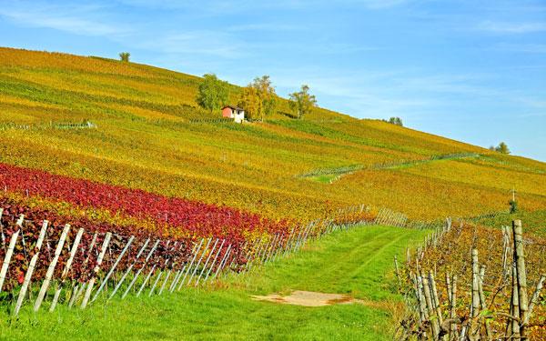 wienwanderweg-maissau-schmidatal-wandern-aktivität-niederösterreich-natur-wein